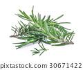 rosemary isolated on white bacground 30671422