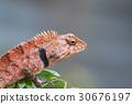 Image of chameleon on nature background. 30676197