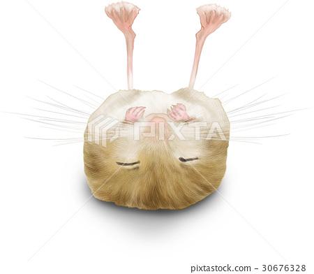 大鼠睡覺插圖 30676328