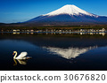 Single swan swim on Yamanaka lake 30676820