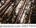ป่าซีดาร์ 30677959
