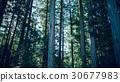 ป่าซีดาร์ 30677983