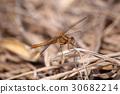 虫子 漏洞 昆虫 30682214