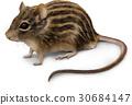 鼠標圖片 30684147
