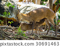 Image of a deer on nature background. wild animals 30691463