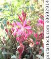 spring, bloom, blossom 30692914