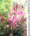 spring, bloom, blossom 30692915