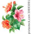 槿 花朵 花 30693091