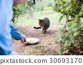 流浪貓食餵養 30693170