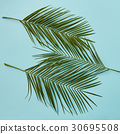 leaves, green, palm 30695508
