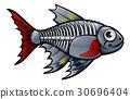 XRay Tetra Fish Cartoon Character 30696404