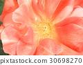 ไม้,โรงงาน,ดอกไม้ 30698270
