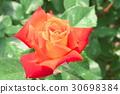 ไม้,โรงงาน,ดอกไม้ 30698384