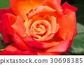 ไม้,โรงงาน,ดอกไม้ 30698385