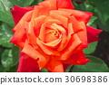 ไม้,โรงงาน,ดอกไม้ 30698386