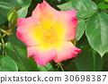 ไม้,โรงงาน,ดอกไม้ 30698387