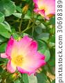 ไม้,โรงงาน,ดอกไม้ 30698389
