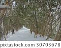 ปีนเขา,โตเกียว,ฤดูหนาว 30703678