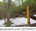 shirokamisanchi, world heritage, primeval beech forest 30704937