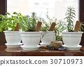 pot, herb, herbal 30710973
