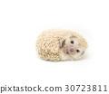 hedgehog on a white background 30723811