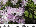 戶外 植物 植物學 30726142