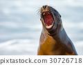 海 獅子 旅行 30726718