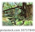 야쿠시마, 이끼, 숲 30737849