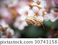 snail and flower 30743156