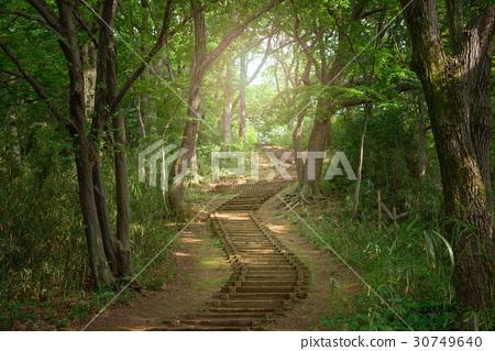 在森林里的远足径 30749640