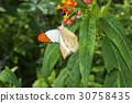 great orange tip 30758435