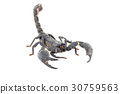 Scorpion isolated on white background 30759563