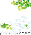 翠綠 鮮綠 青楓 30759923