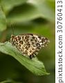 昆蟲 蝴蝶 UPS 30760413