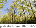 Forest 30760822