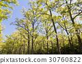 森林 30760822