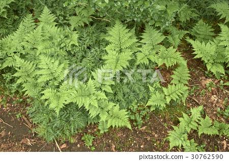 식물 30762590