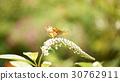 나비 30762911