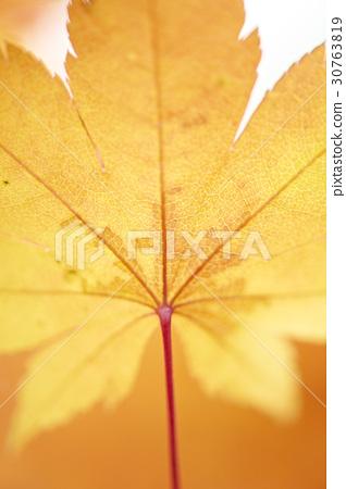단풍잎 30763819