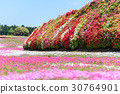 Azalea and mushroom cherry blossoms 30764901