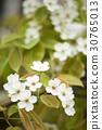 花 廠 植物 30765013