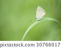 蝴蝶 戶外 室外 30766017