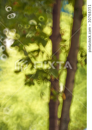 tree 30768351