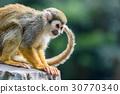 松鼠猴子找到了一些東西 30770340