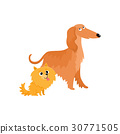 Cute, funny dog characters - Afghan hound and 30771505