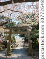 樱花 樱桃树 盛开 30772648