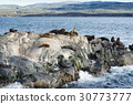 Colony of Sea Lions resting on a small island  30773777