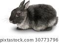토끼 일러스트 리얼 30773796