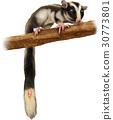 올빼미 다람쥐 그림 30773801