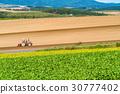 비에이, 언덕, 농업 30777402